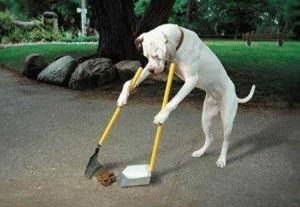 Hình ảnh vui chó dọn phân